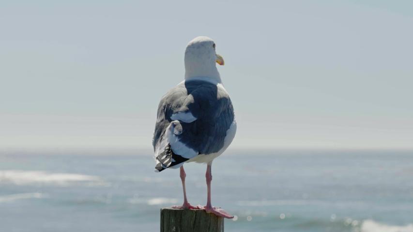 Seagull sitting on log near ocean   Shutterstock HD Video #1041460573