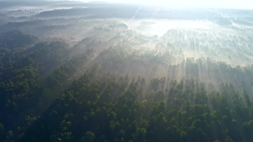 Marvelous view of flying over pine forest in the morning. Sunrise in the misty forest. There is magical fog all the way to the horizon. Aerial shot | Shutterstock HD Video #1041694243