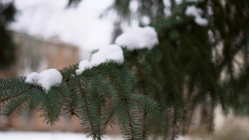 Slow motion of hand shaking the pine branch with snow. Holiday season in December | Shutterstock HD Video #1042371943