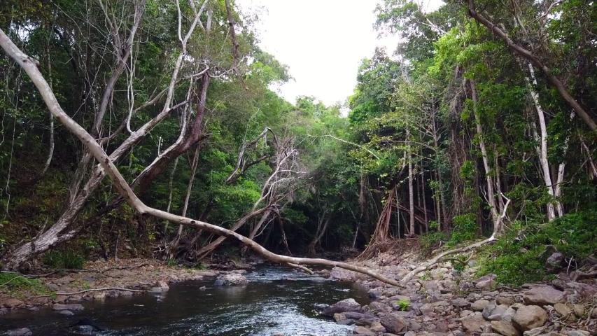 Flowing creek in Cairns Australia looking downstream. | Shutterstock HD Video #1043481223