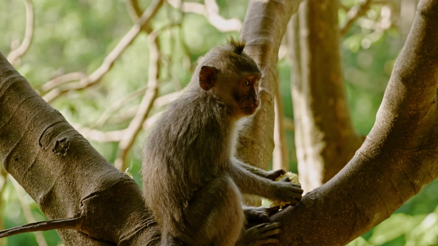 Visiting monkey forest at Ubud, Bali | Shutterstock HD Video #1044792613