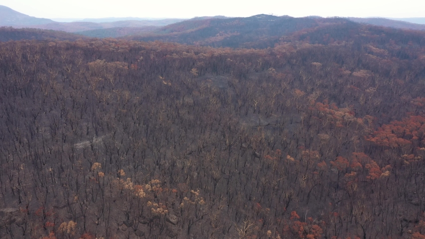 A large area of eucalyptus gum trees severely burnt by bushfire in The Blue Mountains in Australia | Shutterstock HD Video #1044896053