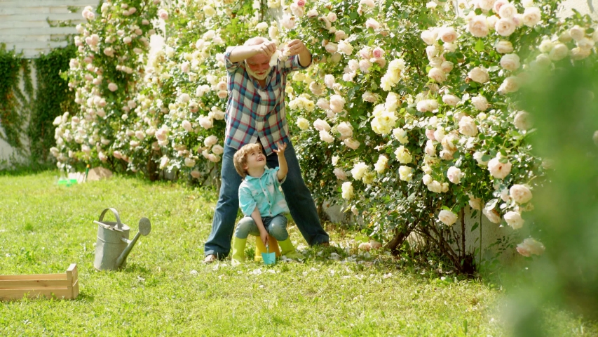 Grandfather and grandchild. Dad teaching little son care plants. Senior gardener. Gardening with a kids. Old and Young. Spring and hobbies. Gardener gardening. Working in garden | Shutterstock HD Video #1045578643