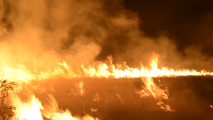 Burning fire in the forest close up. | Shutterstock HD Video #1046593303