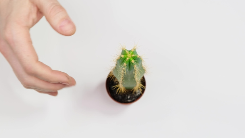 Male hand try take cactus and strongly points a palm. Concept rash decisions and frivolity. Close up. | Shutterstock HD Video #1047085723