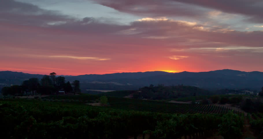 Sunrise over a California Vineyard #10474028