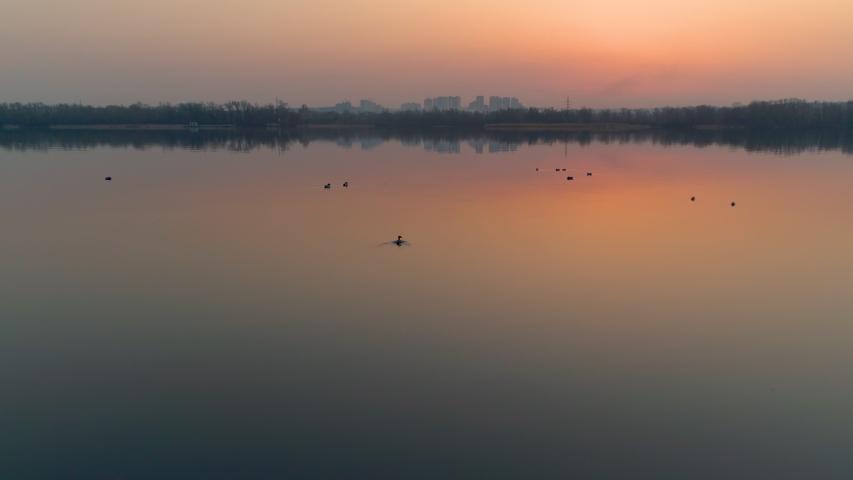 Duck hunting. Ducks on a river after golden sunset. Summer hunting season | Shutterstock HD Video #1049672473