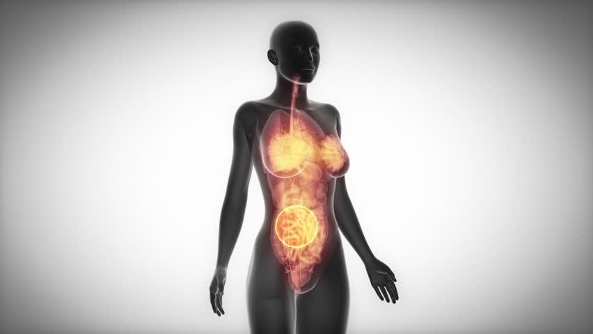 Stock Video Of Organs Female Organ Anatomy Scan In 10501493
