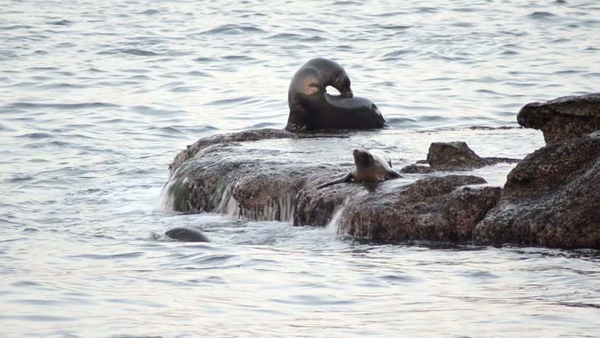 sea lions frolic up on rock