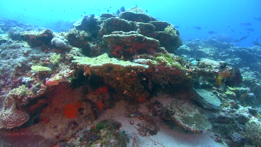 Header of Porites