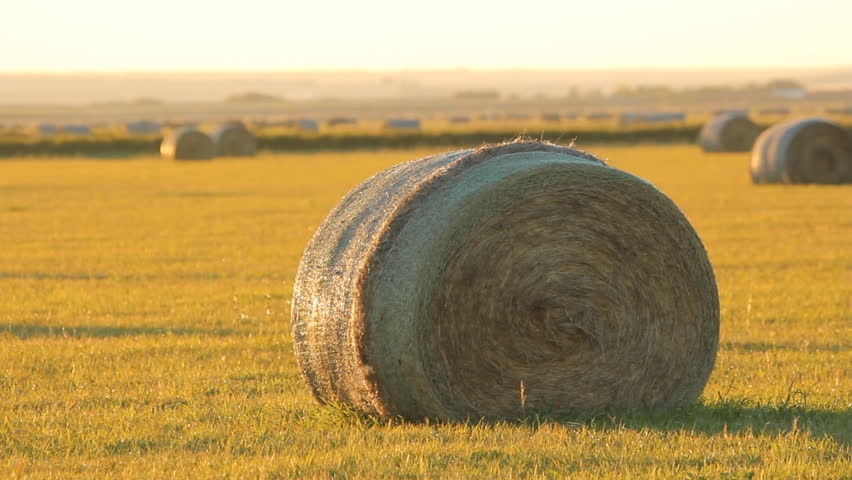 Hay bale in a field. Saskatchewan, Canada.  Bale of hay in a field with heat shimmer in the distance. Bugs flying in the air. Saskatchewan, Canada.