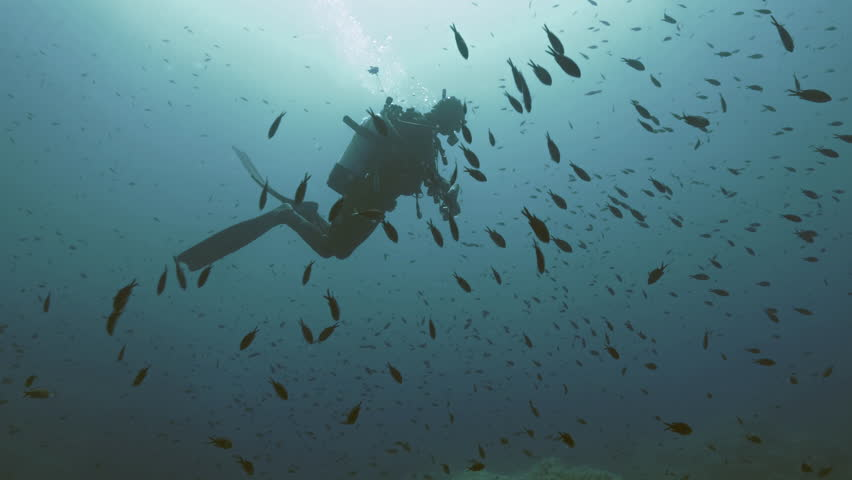 Underwater shot of scub diver in blue water, surrounded by small schooling fish, sunlight enters, silhouette, blue water background, mediterranean sea, italy