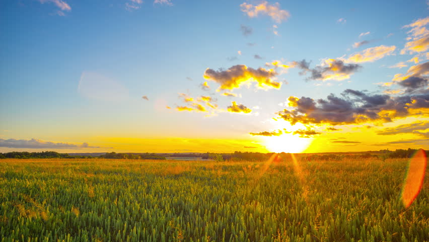 Field of wheat and sunset, panoramic timelapse