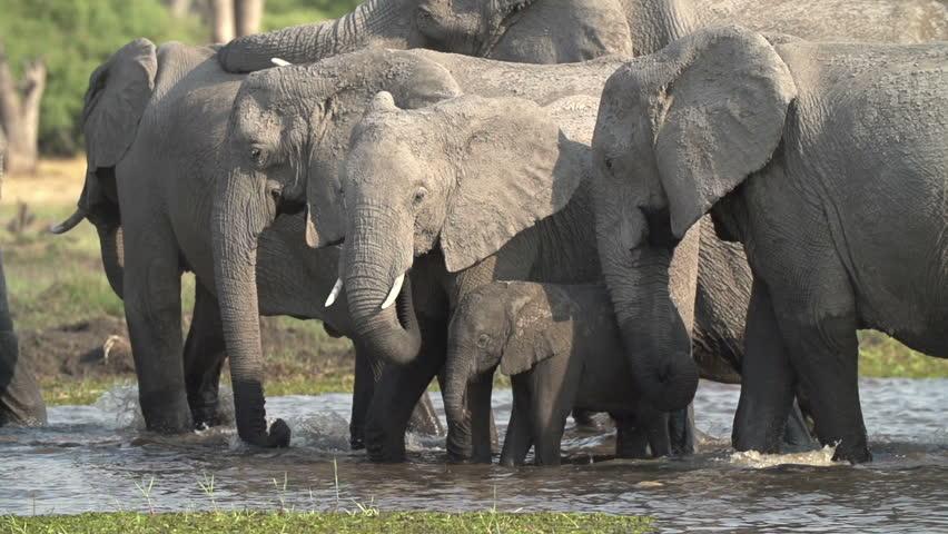 Elephant herd wallpaper - Animal wallpapers - #31768