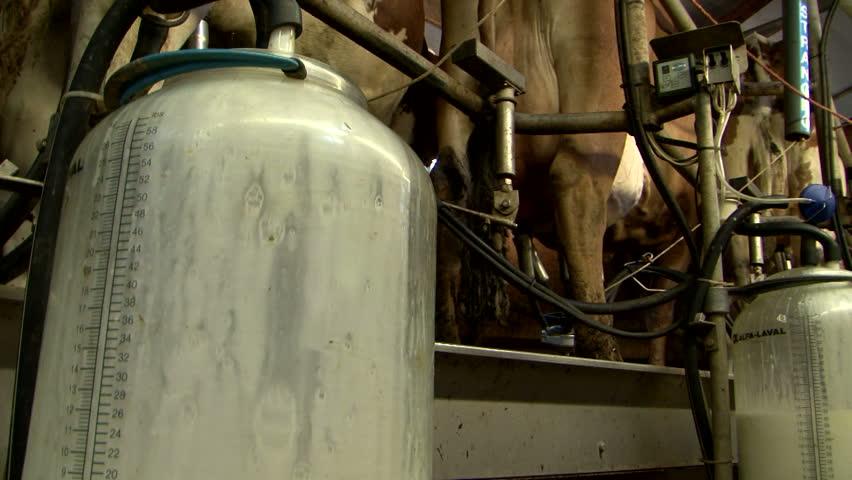 Milking machine videos
