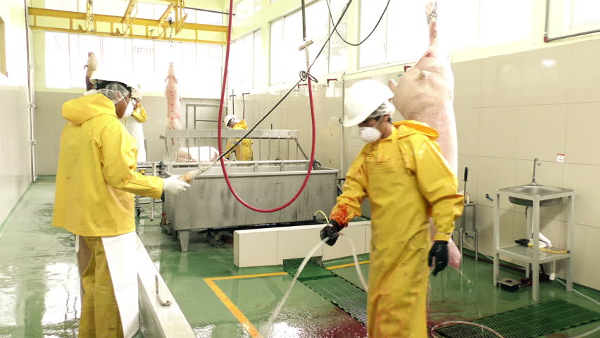 Pigs Processing Facility Inside Of Stock Footage Video 100 Royalty Free 11014253 Shutterstock