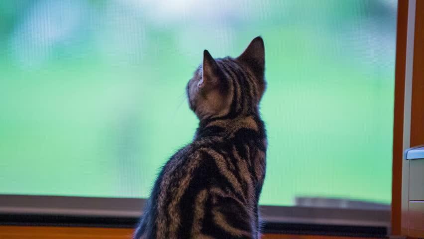 cat digital diagnostic tool