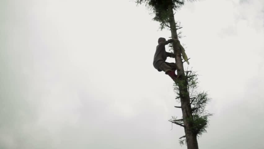sikkim india circa may himalaya village boy climbs a tall tree