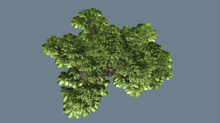 Acacia Tree On Chromakey Alfa Stock Footage Video 100 Royalty Free 11277473 Shutterstock