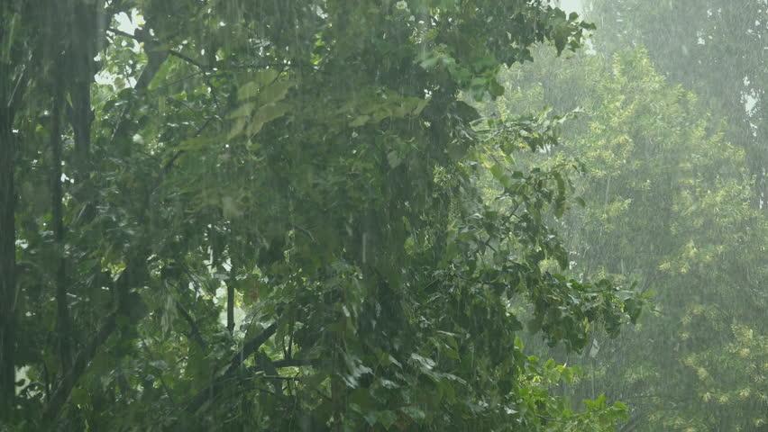 Summer Rain Showers, Heavy Rainstorm In Summer Season, Strong Wind ...