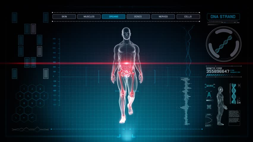 human anatomy walking with touch screen scan in 3d x-ray - loop, Muscles