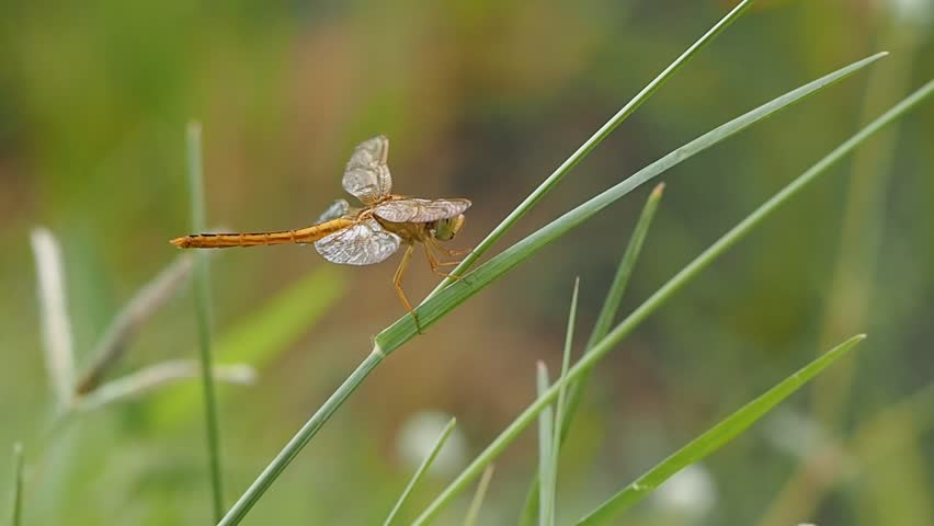 Dragonfly | Shutterstock HD Video #11361383