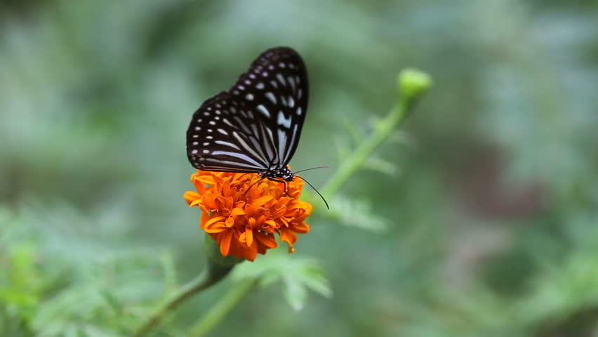 butterfly with flower #11362523