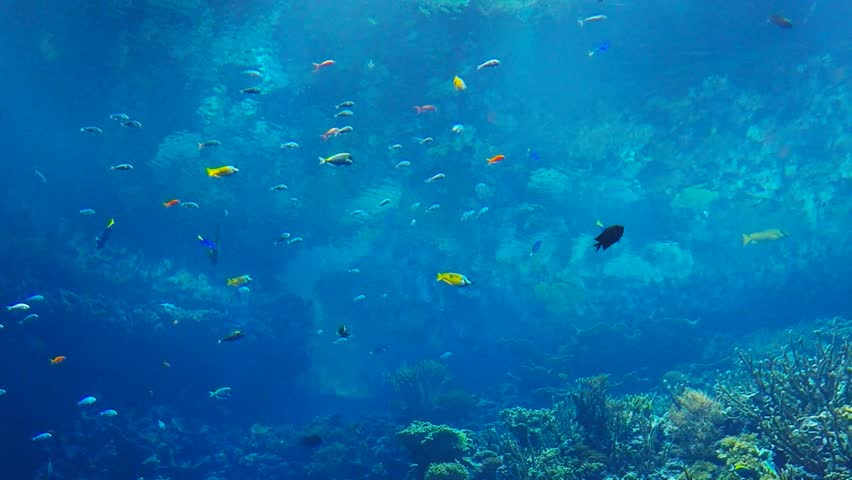 Colorful Fish swim in a fish tank