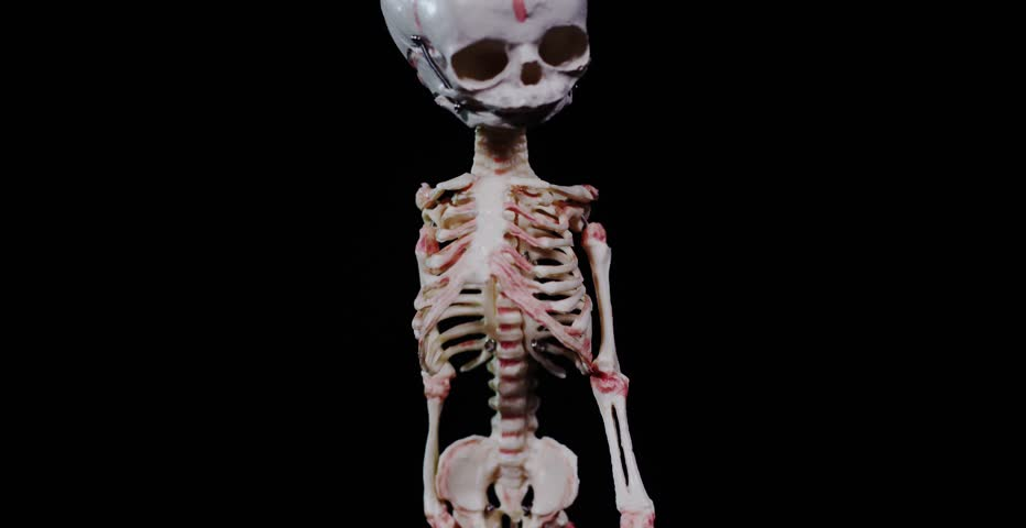 human skeleton with blood vessels stock footage video 24584720, Skeleton