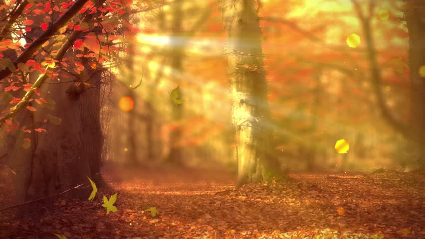 Image result for light of autumn