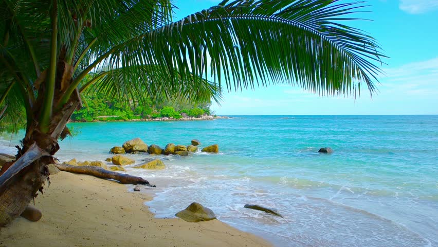 Tropical Island Beach Ambience Sound: Gentle Waves Wash Over A Shaded. White Sand