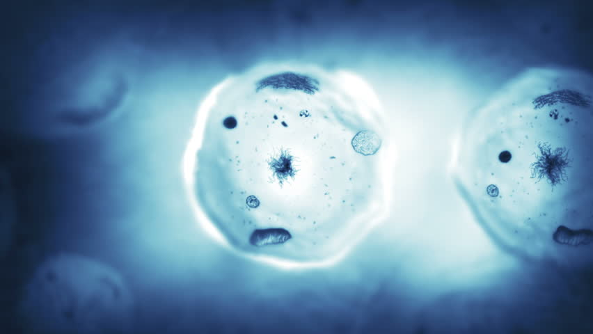 Stages of mitosis. Loopable. Biology background. Blue. The mother cell reproduce by duplicating its contents and dividing into two new cells called daughter cells.