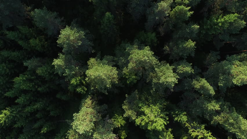 Aerial drone shot over the north european forest. Shot in 4K (UHD). - 4K stock footage clip