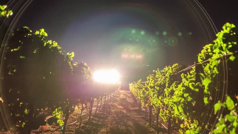 Vineyard during harvest at night with stars and milky way in background. 4K UHD timelapse.