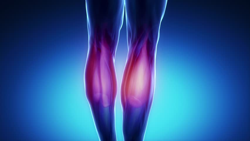 gastrocnemius muscle - 852×480