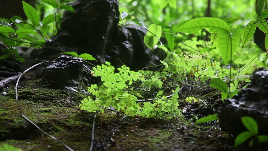 Perfect Jungle And Rocks Macro Forest Floor Slide Stock Footage Video 12019763 |  Shutterstock