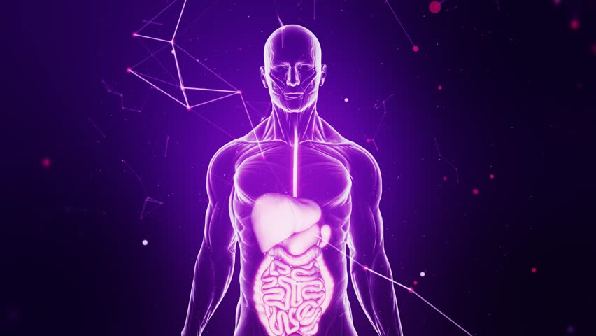 Guts and digestive system scan animation from human anatomy walking guts and digestive system scan animation from human anatomy walking towards camera over purple futuristic and ccuart Choice Image