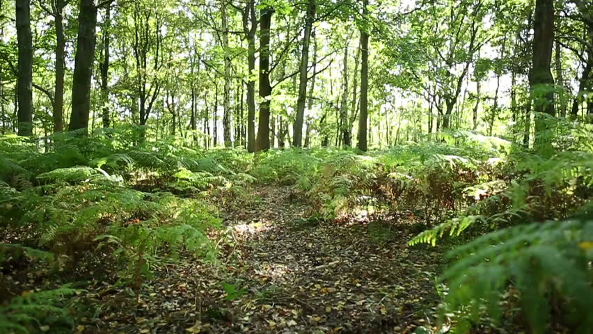 Moving Over Bracken And Leaves Though A Sun Drenched Forest Floor In Summer  Stock Footage Video 12065423 | Shutterstock