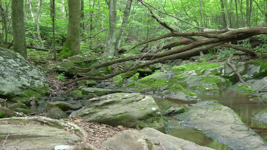 Shenandoah national park forest creek | Shutterstock HD Video #12070403