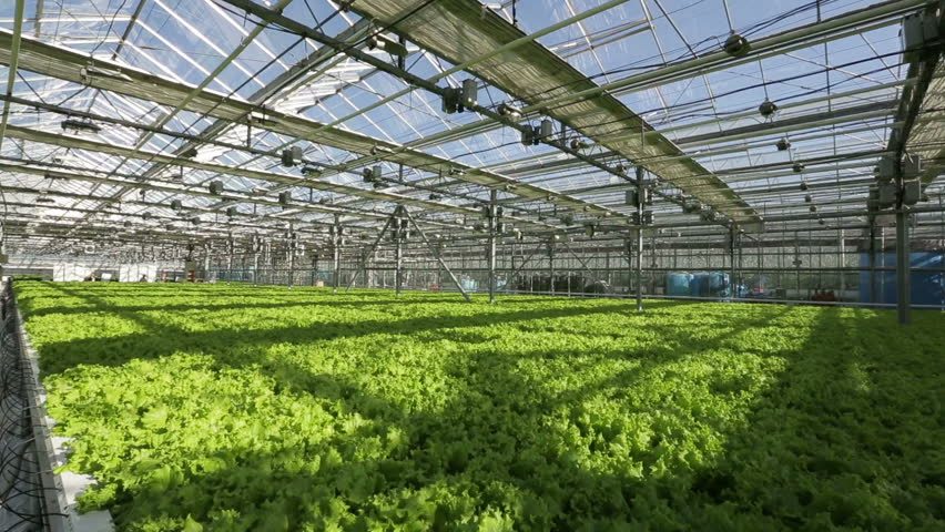Large Industrial Greenhouses. Green Beds. Shooting From Height   HD Stock  Video Clip