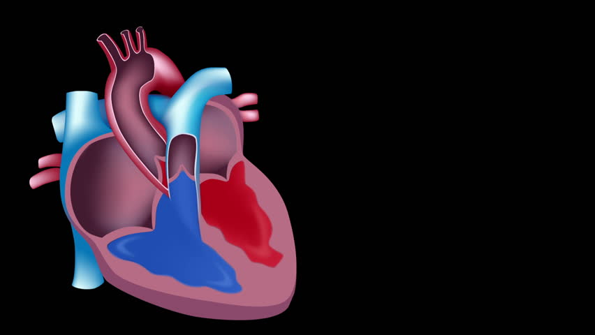 Slow motion of blood flow in the heart, seamless loop