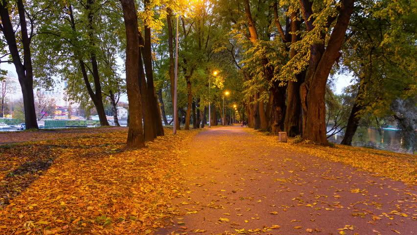 autumn, park, trees, light, morning, foliage | top nature ...