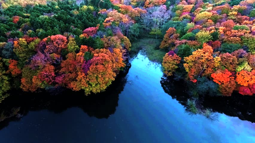 Aerial: pond of blue and autumnal forest / October 14, 2015 to the shooting in Japan of Forest Park / Autumnal forest of eye color of the water of vivid pond, such as wake up and the golden age