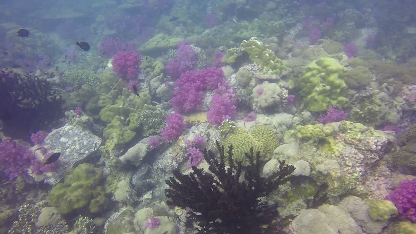 Under Water Shot Of Prolific Teaming Coral Reef Landscape, Full Of ...