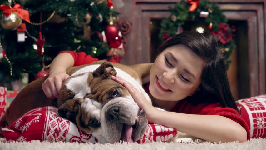 the girl lies on a pillow and kisses a bulldog under a New Year tree gently