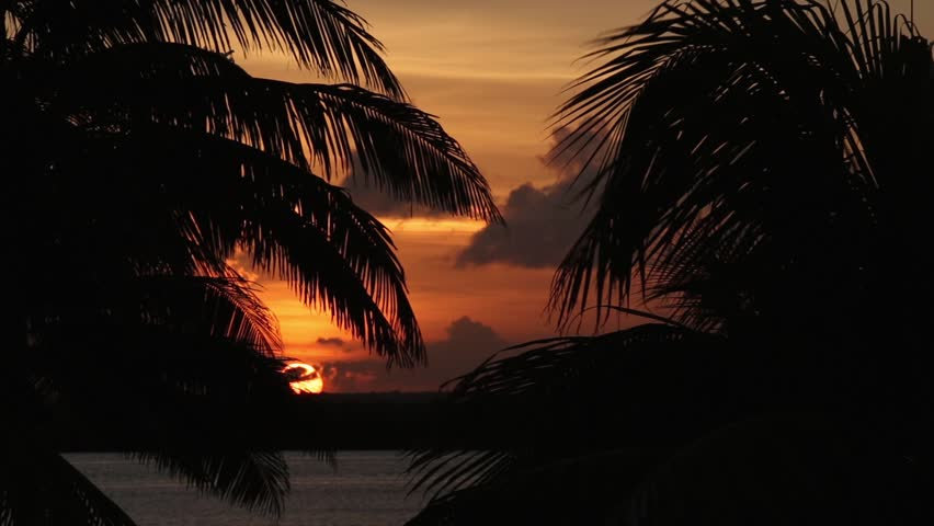Sunset through palm tree leaf silhouette