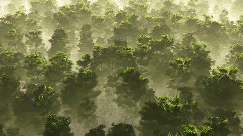 morning fog in dense tropical rainforest. aerial