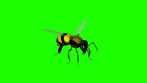Wasp Bee Swarm Flying on a Green Screen Background