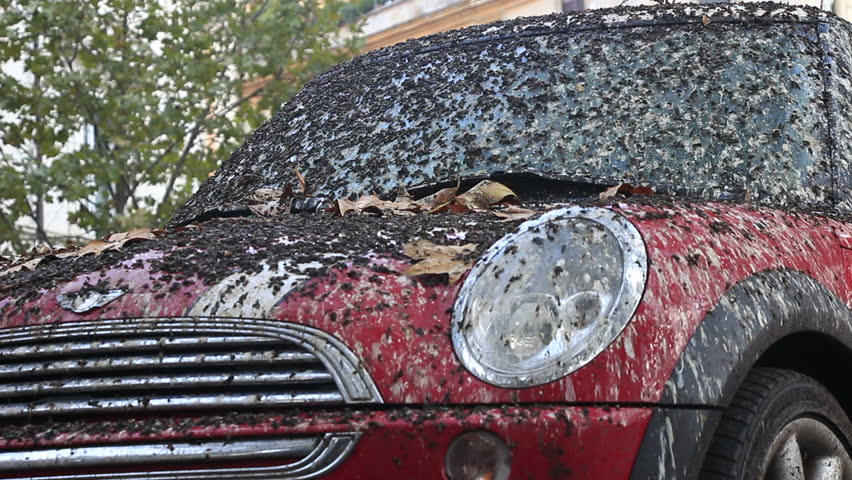 Car Covered With Bird Poop