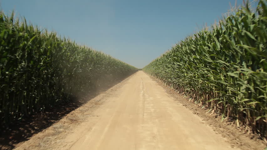 Driving Plate of dirt road in the middle of a cornfield. Back, day time with tall green corn and blue sky. 24fps. PR 422., Generic/California, USA - August, 2010